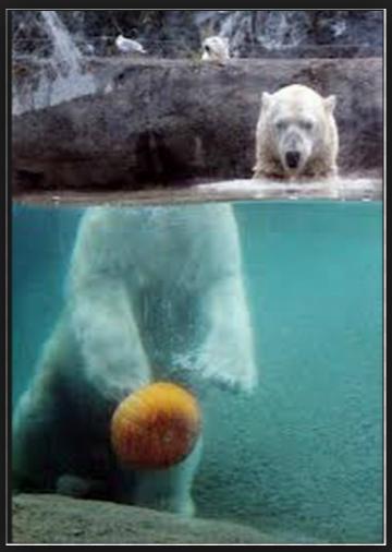 Headless Polar Bear